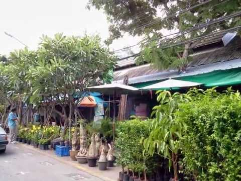 Chatuchak Flower and Plant Market