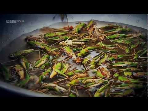 Insect Street Food